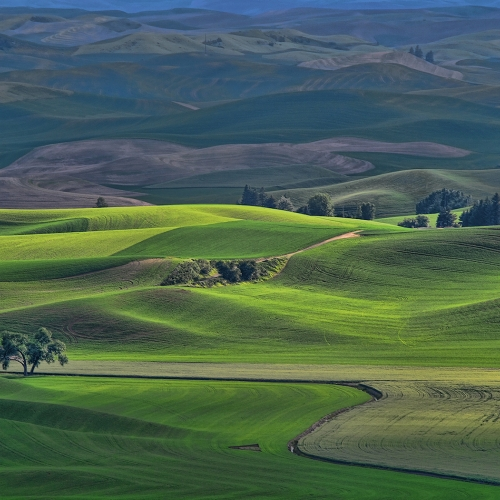 COM 1st Bert Sharp - Palouse