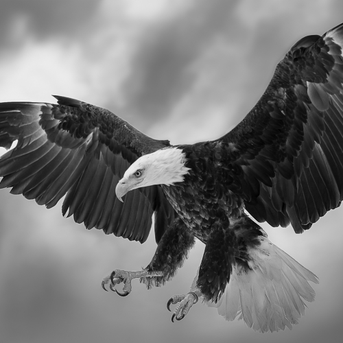 2nd Place Merit Award - Isabel Da Silva Kelly - The Wings Of An Eagle