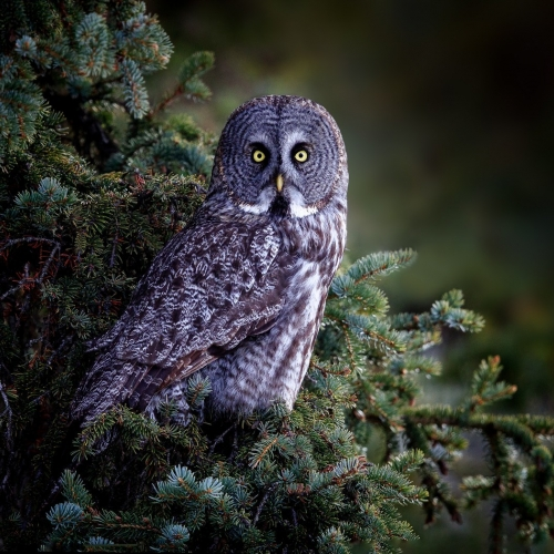 3rd Merit - British Columbia - Norm Dougan - On Alert