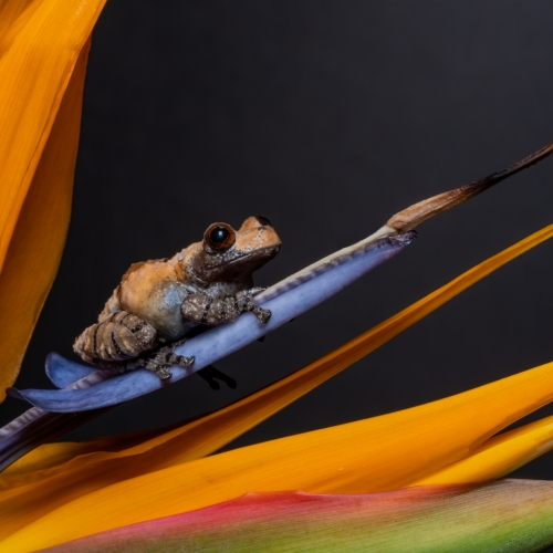 3rd Merit - Closeup - Julie Hay - Frog On Flower