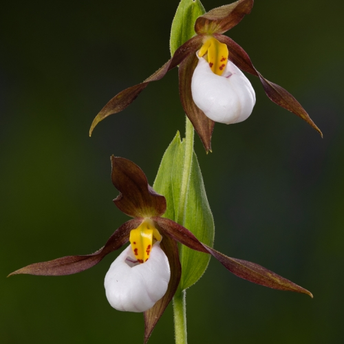 Bronze Medal - Martin Ross - Lady S Slippers Out Dancing