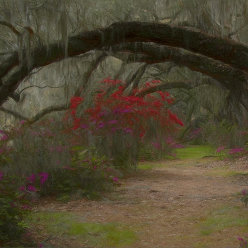 Gold Medal - Judy Boufford - Azales With Live Oak Tree Arch