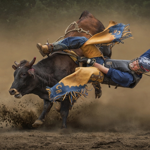 Gold Medal - Kai Sun Law - Bull Riding