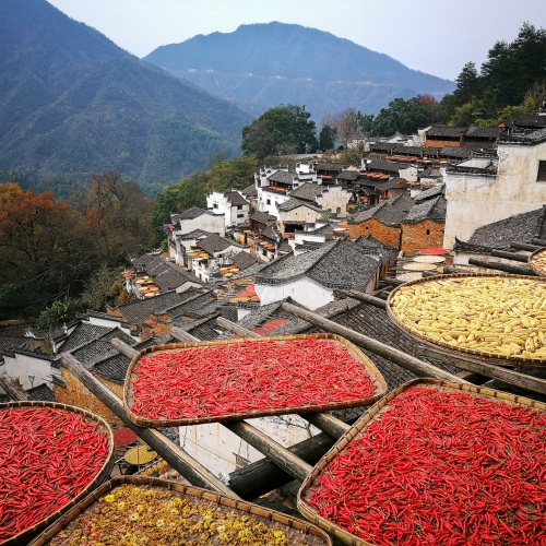 GOLD Ying Shi - Harvest Season