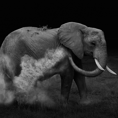 Honour Award Yun Wang Elephant Sand Bathing