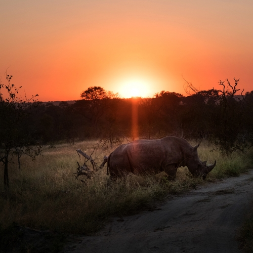 Honour Award - Kathryn McGravey - Sunrise With A Rhino