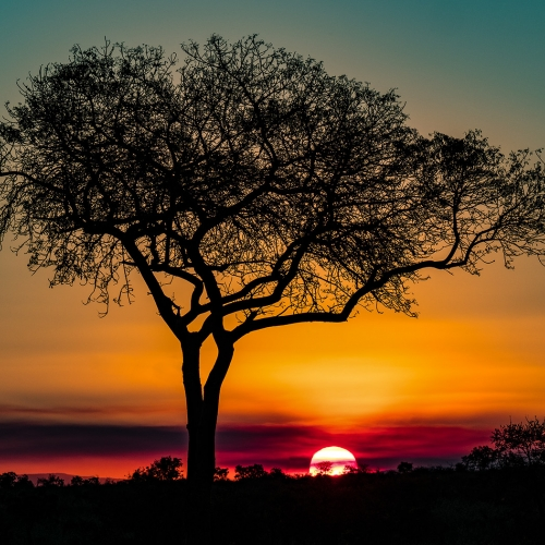 Honour Award - Kathryn McGarvey - Classic African Sunset