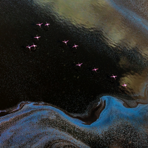 Honour Award - Yang Jiao - Flamingo Fly Over Lake  Magadi