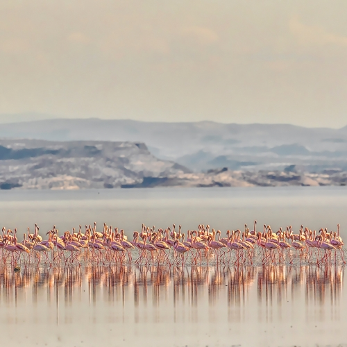 Honour Award - Yang Jiao - Flamingo In Salt Lake