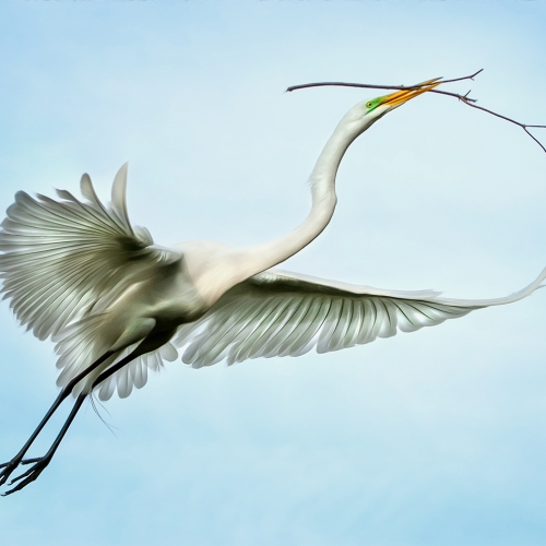 MERIT 1 PGNS Viki Gaul - Egret And Long Twig
