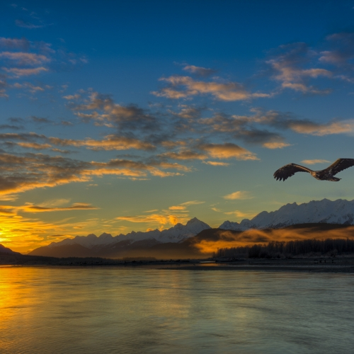 SILVER LCC Don Rycroft - Alaska Sunrise With Eagle
