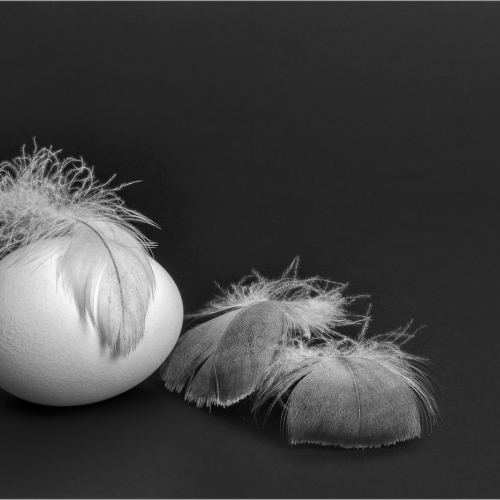 Silver Medal Judith Sgargi Feathers And The Egg