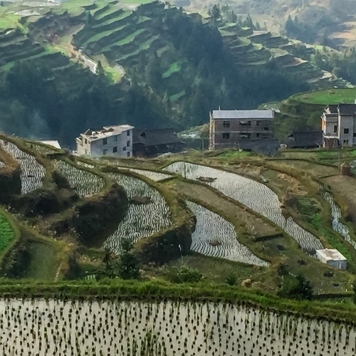 Silver VCC Willie M Waddell - Rice Terraces Liping China