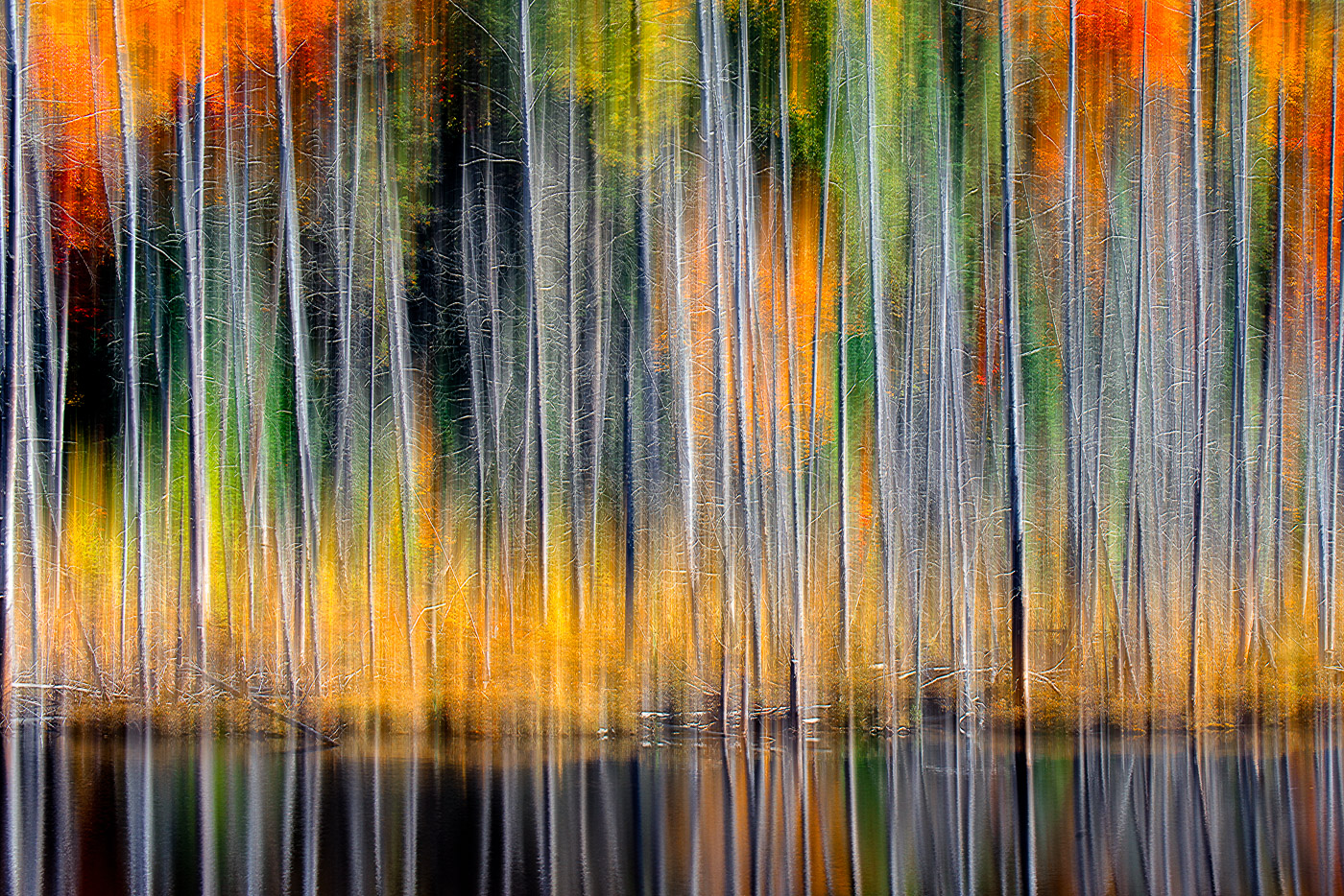 CAPA Gold Medal winning image by Edward Ho-Fall_Colours